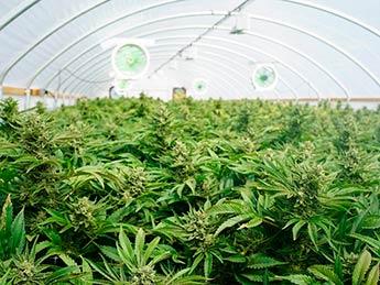 img-growshop
