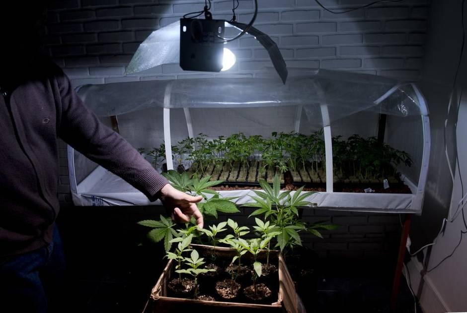 Migliori fertilizzanti biologici per coltivazioni indoor