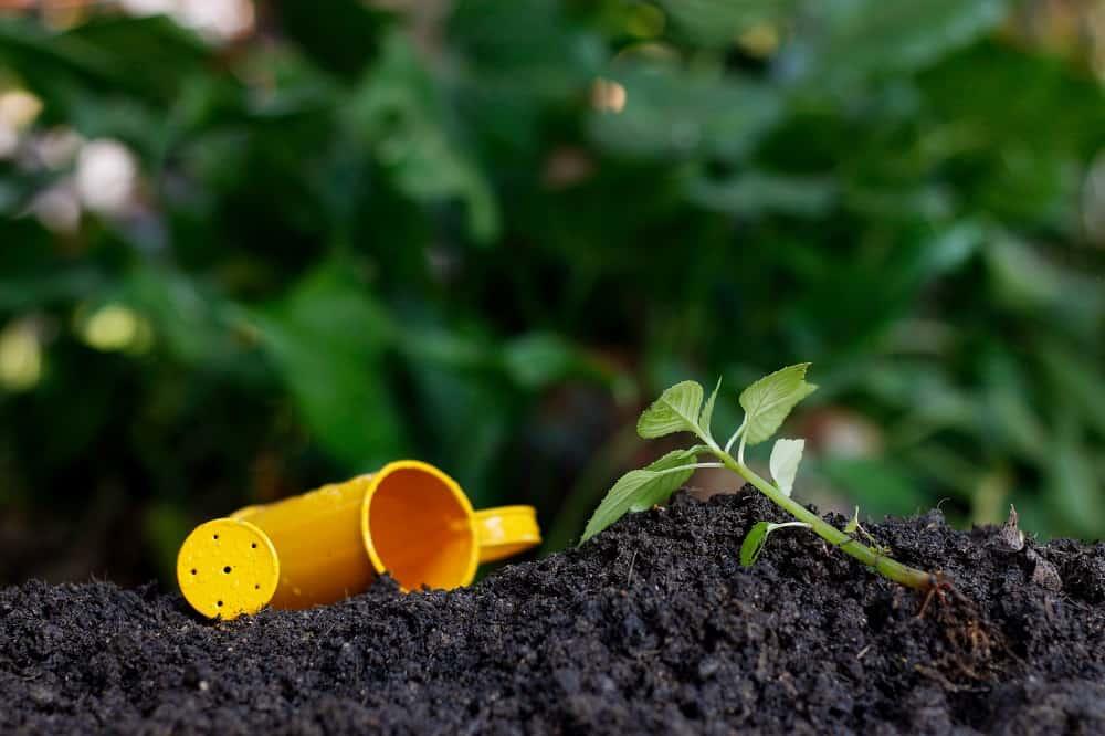 Fertilizzanti per peperoncini