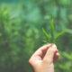 Fertilizzanti CANNA