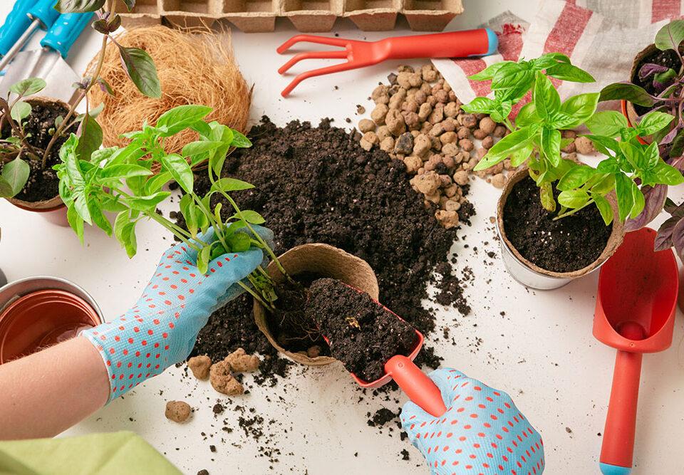 Kit di germinazione e taleaggio