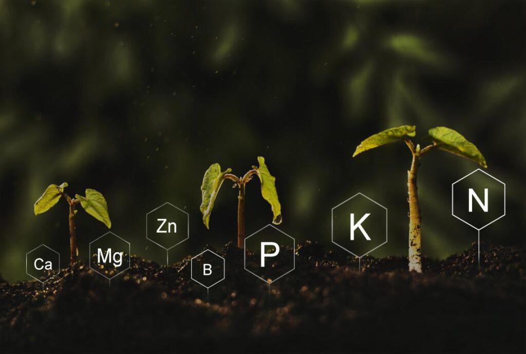 Fertilizzante BioBizz