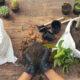 AMMENDANTI per coltivazione