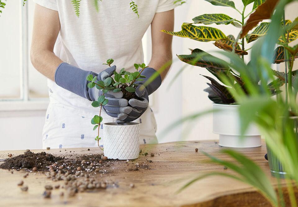 Fertilizzanti Super Soil